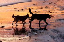 Sunset-chase