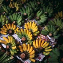Bananas von Eugene Zhulkov