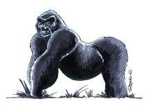 Gorilla by Rodrigo Diaz Aravena