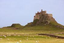 Lindisfarne wool von Ed Lukas