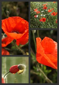 Mohn-Collage 1 by Ina Hartges