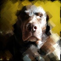 Bella gelb von Arno Linke-Rohn