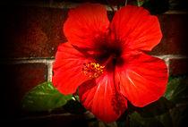 Red hibiscus von Milena Ilieva