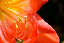 Flower von reorom