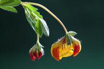 Bunte Natur - colorful nature von ropo13