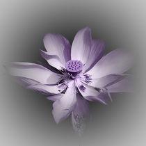 Lotusblüte - kreativ - flieder/violett/rosé von Ursula Fleiß
