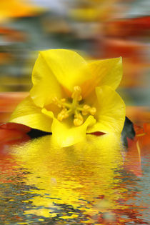 Floral Digital Art by David J French