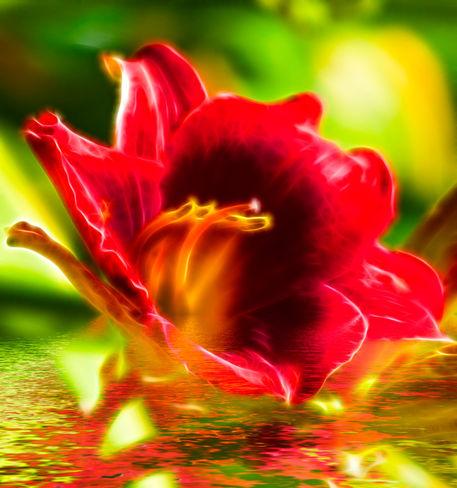Flower2fraa