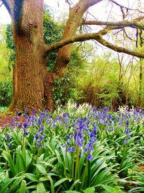 Bluebell Bliss von Sarah Clark