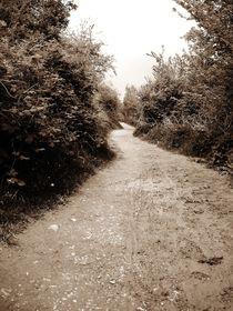 Muddy Trail by Sarah Clark