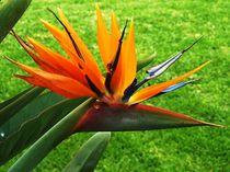 Floral Fun von Sarah Clark