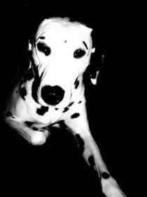 Pooch Portrait von Sarah Clark