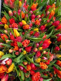 Mega tulips by Robert Gipson