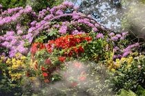 PAINTED GARDEN von photofiction