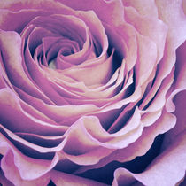 Le pétale de rose pourpre von AD DESIGN Photo + PhotoArt