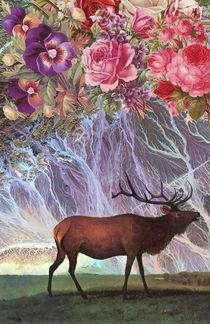 Deer von Dragana Nikolic