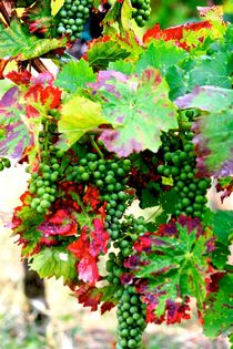 The Grapes are High von Bianca Baker