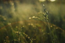 grass by Ewa Zebrowska