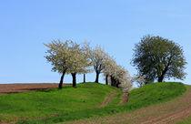 Weg durch den Frühling von Wolfgang Dufner
