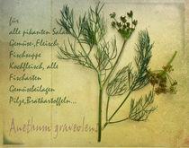 Dill von Franziska Rullert