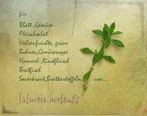 Bohnenkraut by Franziska Rullert