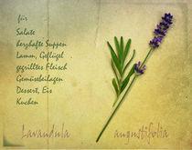 Lavendel by Franziska Rullert