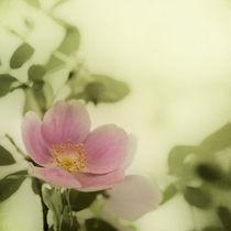 Rosegreen