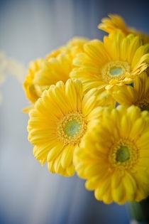 Yellow flowers by Lina Gavenaite