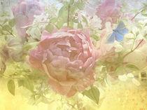 Päonienstrauß mit Schmetterling by Franziska Rullert