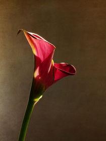 glowing beauty von Franziska Rullert