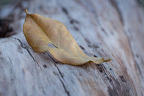 Leaf by Michelle Roets