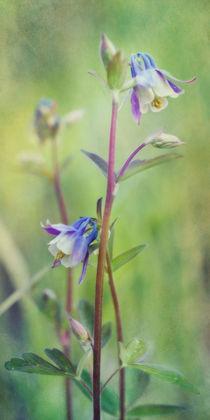 hillside meadow beauty by Priska  Wettstein