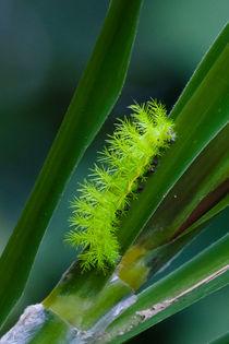 Caterpillar-2574c-2