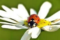 Ladybug von Julia Delgado