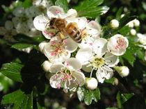 Bienenwesen von hyperspace