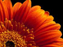 Flower-5074580