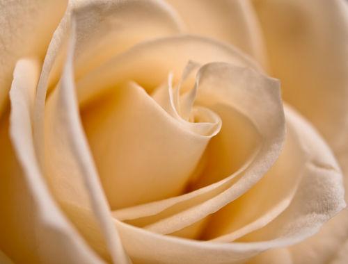 Roseforjudy-223856