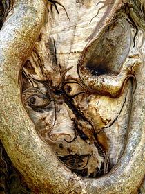 Der Geist im Baum by Heidrun Carola Herrmann