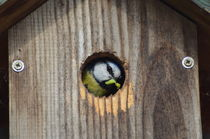 great tit bird von Michel m.dijkstra