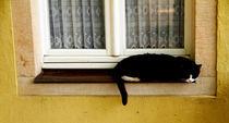Sleeping-black-cat