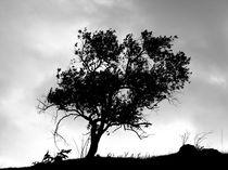 Tree by macrobioticos
