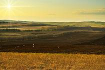 Plowed fields by larisa-koshkina