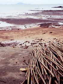 bamboo on the beach by Wilma Traldi