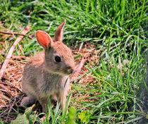 Little Lost Bunny von fizz112