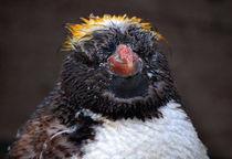 Baby Penguin von Rob Hawkins