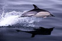 Flying Porpoise von Rob Hawkins
