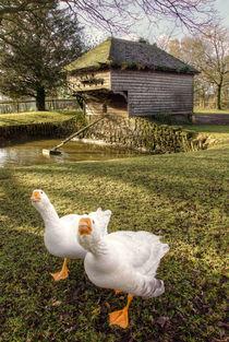 Goosey Goosey by Rob Hawkins