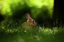 Rabbit.  von Samuel Gamlin
