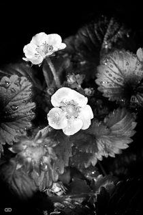 Black Series Flowers by Anne Bollwahn