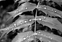 Black Series Raindrops V von Anne Bollwahn